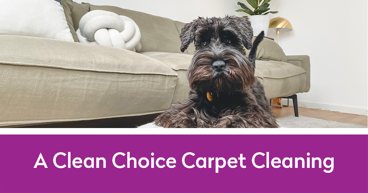 A Clean Choice Carpet Cleaning | dog and clean upholstery