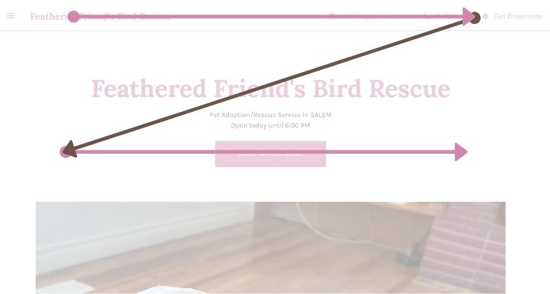 Z pattern on top of Feathered Friend's Bird Rescue website